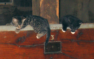 Kittens playing in the Old Barn.